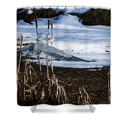 Shower Curtain featuring the photograph Blue Heron by Jim  Hatch