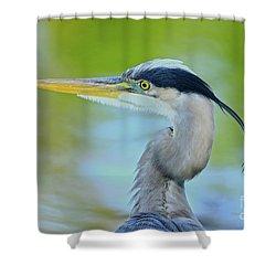 Shower Curtain featuring the photograph Blue Heron Portrait 2017 by Deborah Benoit