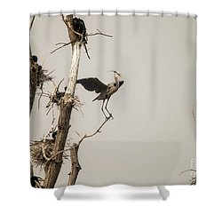 Shower Curtain featuring the photograph Blue Heron Posing by David Bearden