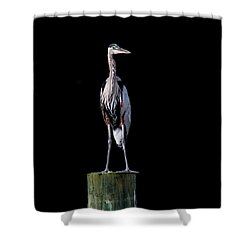 Blue Heron Prestige Shower Curtain