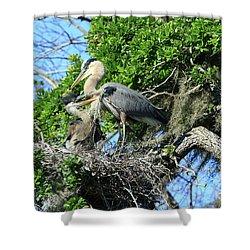 Shower Curtain featuring the photograph Blue Heron Series Baby 1 by Deborah Benoit
