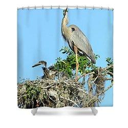 Shower Curtain featuring the photograph Blue Heron Series Baby 2 by Deborah Benoit