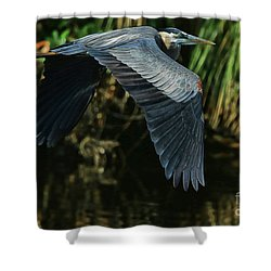 Shower Curtain featuring the photograph Blue Heron Series The Pond by Deborah Benoit
