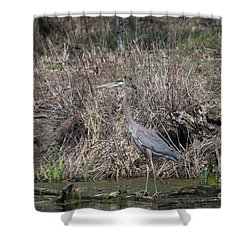 Shower Curtain featuring the photograph Blue Heron Stalking Dinner by David Bearden
