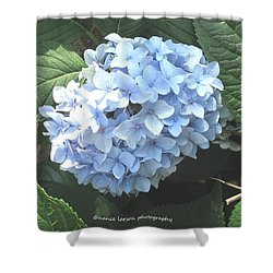 Blue Hydrangnea Shower Curtain by Nance Larson