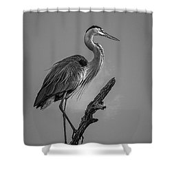 Blue In Black-bw Shower Curtain