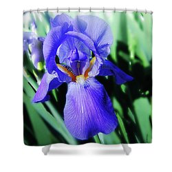 Blue Iris 2 Shower Curtain