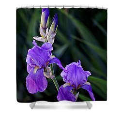Blue Iris Beauty Shower Curtain