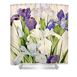 Blue Irises-posthumously Presented Paintings Of Sachi Spohn  Shower Curtain by Cliff Spohn