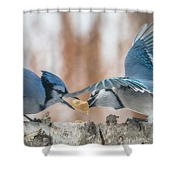 Blue Jay Battle Shower Curtain by Patti Deters