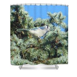 Blue Jay Colorado Spruce Shower Curtain