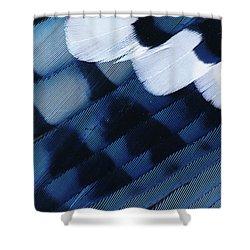 Blue Jay Cyanocitta Cristata Feathers Shower Curtain by Rolf Nussbaumer