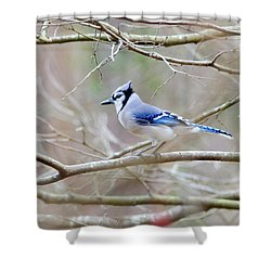 Shower Curtain featuring the photograph Blue Jay by George Randy Bass