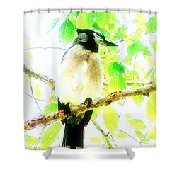 Blue Jay IIi Shower Curtain by Clarice  Lakota