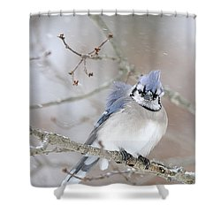 Blue Jay In A Blizzard Shower Curtain