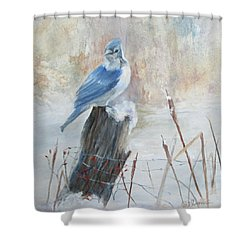Blue Jay In Winter Shower Curtain