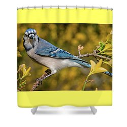 Blue Jay In Yellow Spring Shower Curtain