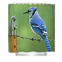 Blue Jay On The Fence Shower Curtain