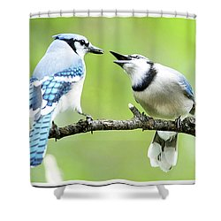 Blue Jay Parent Feeding Juvenile Shower Curtain