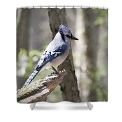 Blue Jay Perch Shower Curtain by Anita Oakley