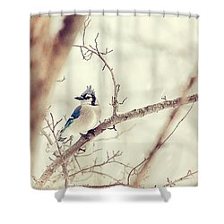 Blue Jay Winter Shower Curtain by Karol Livote