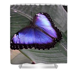 Blue Morph Shower Curtain by David and Lynn Keller