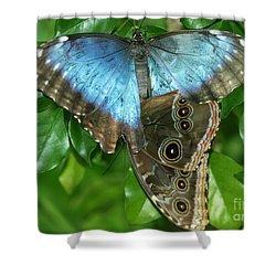 Blue Morpho Butterflies Shower Curtain by Sabrina L Ryan