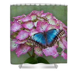 Blue Morpho Butterfly On Pink Hydrangea Shower Curtain