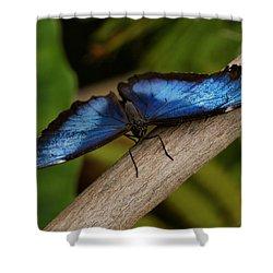 Blue Morpho Butterfly Shower Curtain by Sandy Keeton