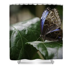 Blue Morpho On A Leaf Shower Curtain