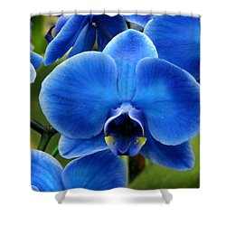 Blue Orchid Shower Curtain