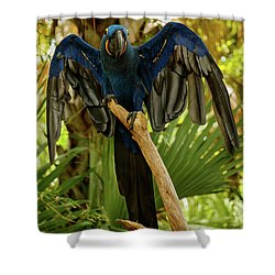 Blue Parrot Shower Curtain