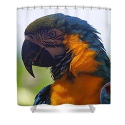 Blue Parrot Shower Curtain