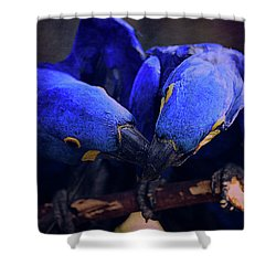 Blue Parrots Shower Curtain