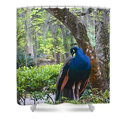 Blue Peacock  Shower Curtain by Joan Reese