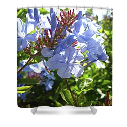 Shower Curtain featuring the photograph Blue Plumbago by Mary Ellen Frazee