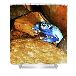 Shower Curtain featuring the photograph Blue Poison Dart Frog by Anthony Jones
