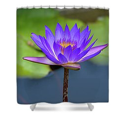 Blue Purple And Orange Water Lily Shower Curtain