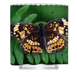 Blue Ridge Butterfly Shower Curtain by Kay Lovingood