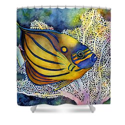 Blue Ring Angelfish Shower Curtain