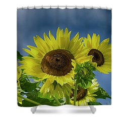 Blue Sky Day Shower Curtain