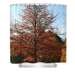 Blue Sky Shower Curtain by Jana E Provenzano