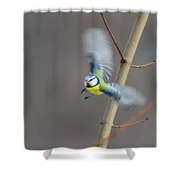 Blue Tit In Flight Shower Curtain