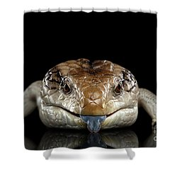 Blue-tongued Skink Shower Curtain by Sergey Taran