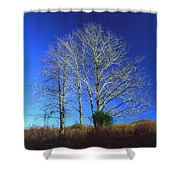 Blue Tree In Tennessee Shower Curtain