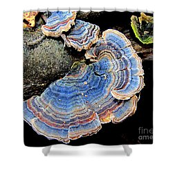 Blue Turkeytail Fungi Shower Curtain by Joshua Bales
