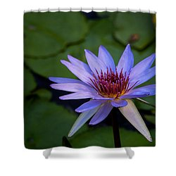 Blue Water Lily In Pond 2 Shower Curtain