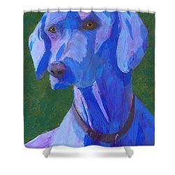 Shower Curtain featuring the painting Blue Weimaraner by Donald J Ryker III
