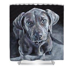 Blue Weimaraner Shower Curtain