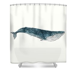 Blue Whale From Whales Chart Shower Curtain by Amy Hamilton